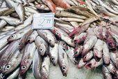 pic of stall  - Fish market stall in La Boqueria Barcelona Spain  - JPG