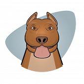 picture of pitbull  - pitbull showing tongue - JPG