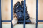 foto of puppy eyes  - Unhappy puppy behind bars in shelter - JPG