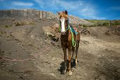 foto of bromo  - Horse for tourists rent at Mount Bromo volcanoes in Bromo Tengger Semeru National Park - JPG