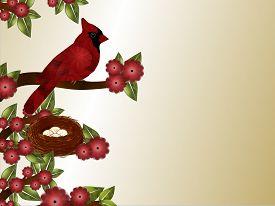 pic of cardinal-bird  - Red tufted bird  - JPG