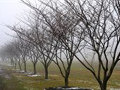 Row Of Trees In Fog poster