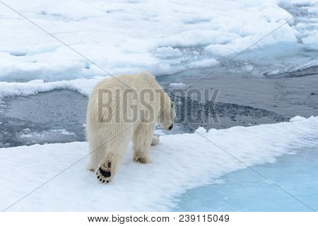 poster of Polar Bear