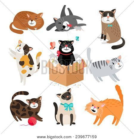 poster of Vector Cats. Simple Cute Cartoon Drawing Different Cat Collection Isolated On White, Sleeping And Si