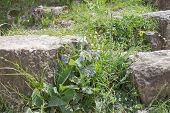Photo Of Ancient Ruins. Blue Flower, Green Grass In Ruins. Old Ruined Farmstead poster