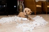 Remorseful Naughty And Bored Dog Destroyed Tissue Roll Into Pieces When Home Alone poster
