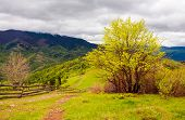 Mountainous Countryside In Springtime. Fence Down The Hill Along The Country Road. Tree On The Grass poster