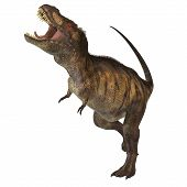 picture of behemoth  - Tyrannosaurus Rex was one of the largest carnivores of the Cretaceous Period of Earths history - JPG