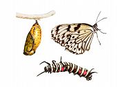 Metamorphosis Life Cycle