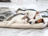 Cat and dog sleeping. Pets sleeping embracing poster
