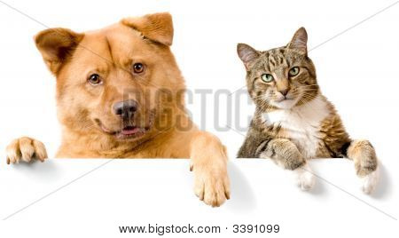 poster of Dog And Cat Above White Banner