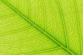 Leaf Nature Background. Nature Background Of Leaves. Tree Leaves Nature Background. Close Up Backgro poster