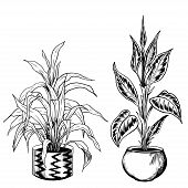 Black And White Sketchy Houseplants In Flowerpots. Hand Drawn Vector Illustration. poster