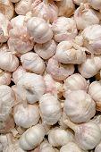 White Garlic Pile Texture. Fresh Garlic On Market Table Closeup Photo. Vitamin Healthy Food Spice Im poster