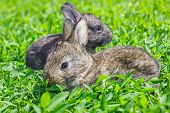 stock photo of wild-rabbit  - Little gray rabbit sunny day on the green lawn - JPG