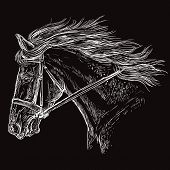 Horse Portrait With Bridle. Beautiful Horse Head With Long Mane In Profile In White Color Isolated O poster