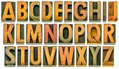 English alphabet in wood type - 26 isolated letters in letterpress printing blocks with a lot of cha poster