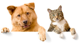 stock photo of cat dog  - Dog and Cat above white banner looking at camera - JPG
