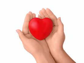 stock photo of hand heart  - Isolated girl hands with red heart - JPG