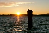 picture of lagos  - Golden sunset over lago di Garda in Italy near Sirmione with a backlit wooden pole and a seagull - JPG
