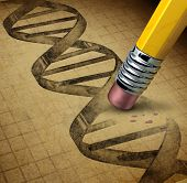 stock photo of genetic engineering  - Genetic engineering and DNA manipulation as the biotechnology science of genetically modified foods or living organisms with an image of a dna strand on a parchment texture being changed by a pencil eraser - JPG