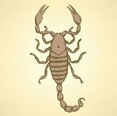 image of scorpion  - Sketch horrible scorpion in vintage style background - JPG