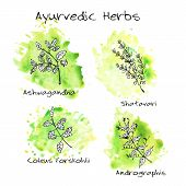 image of ashwagandha  - Handdrawn set of Ayurvedic Herbs with green watercolor blots - JPG