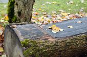 foto of banquette  - Photo of a bench with orange leaves in the park - JPG