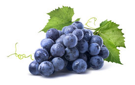 picture of wet  - Blue wet Isabella grapes bunch isolated on white background as package design element - JPG