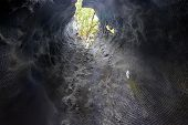 picture of redwood forest  - Inside the giant sequoia trunk - JPG