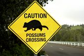 image of possum  - A sign warning drivers that possums cross the road - JPG