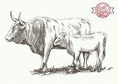 picture of cattle breeding  - adult bull and goby  grazing cattle vector sketch on a white background - JPG