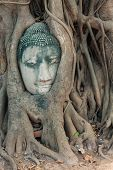 picture of budha  - Head of Buddha statue in the tree roots at Wat Mahathat Ayutthaya Thailand - JPG