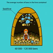 picture of beehive  - The information poster containing information on that how many bees lives in a beehive - JPG