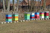 foto of bee-hive  - Bee hive on the field. Bee hive boxes.