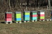 image of bee-hive  - Bee Hive boxes - JPG