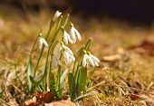 picture of early spring  - Spring flowers - JPG