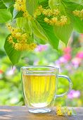 stock photo of linden-tree  - cup with linden tea and flowers on wooden table in garden - JPG