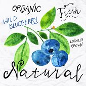 foto of 1950s  - Vector illustration of watercolor wild blueberry - JPG