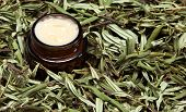 picture of sea-buckthorn  - Safe organic cosmetics - JPG