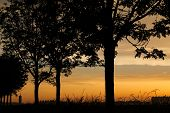 pic of row trees  - A sunset photo with a row of trees and water tower silhouette in Holland - JPG