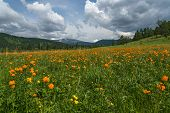 picture of cloud forest  - Beautiful mountain landscape with orange flowers in the meadow on a background of mountains forest and blue sky with clouds - JPG