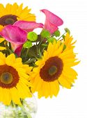 foto of calla  - bouquet of   sunflowers callas and mums close up isolated on white background - JPG