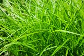 stock photo of grass area  - beautiful green grass - JPG