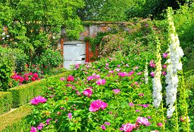 foto of english rose  - English walled garden full of old roses and foxgloves - JPG