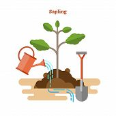 Sapling Process Flat Vector Illustration. Drawn Gardening And Seedling With Green Sprout, Watering C poster