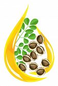 picture of oleifera  - Moringa oleifera oil - JPG