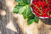 Juicy Ripe Red Currant On Wooden Background. Old Wooden Background. Copy Space poster