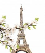 Famous landmark of Paris - Eiffel tower and cherry flowers. Isolated on white background poster