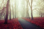 Autumn Nature - Misterious Autumn View Of Autumn Park Alley In Dense Fog. Autumn Foggy Landscape Sce poster